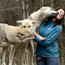 France, Territoire de Belfort (90),Lepuix-Gy, Laetitia Briswalter, élevage de Chiens loups tchécoslovaques