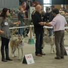 Expo Canine Metz-27