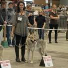 Expo Canine Metz-34