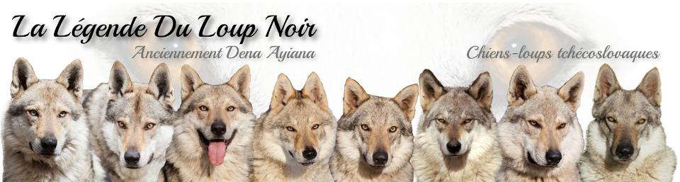 Chiens-loups tchécoslovaques – La Légende Du Loup Noir