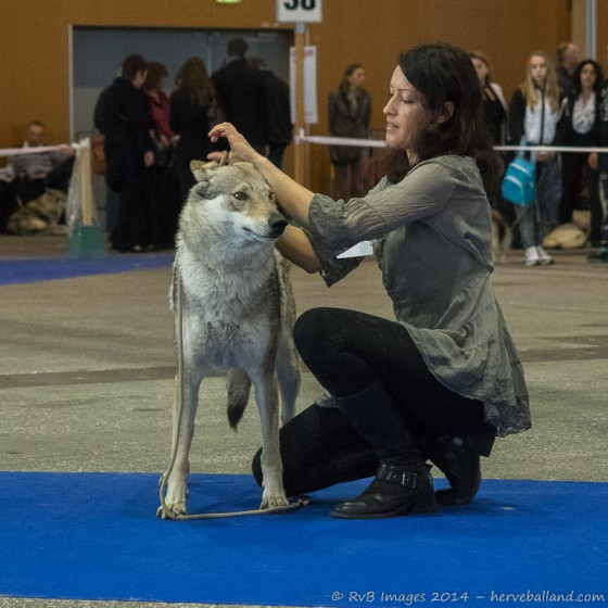 Expo Canine Metz-14