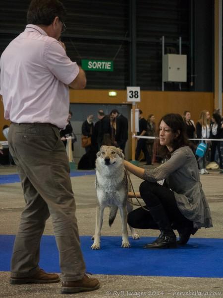 Expo Canine Metz-16