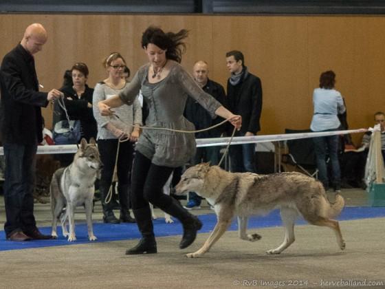 Expo Canine Metz-18