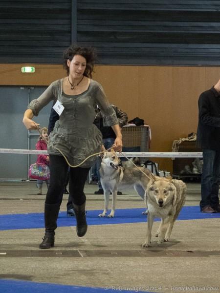Expo Canine Metz-20