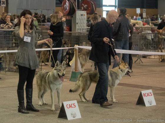 Expo Canine Metz-28