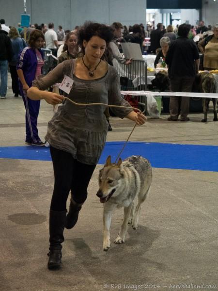 Expo Canine Metz-29