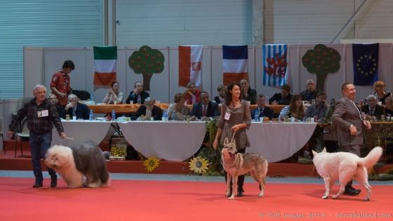 Expo Canine Metz-38