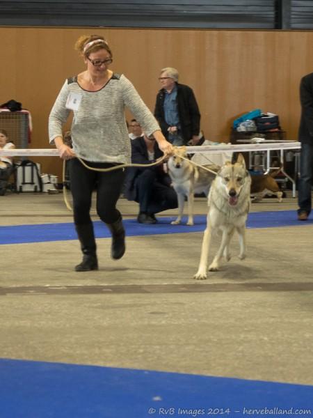 Expo Canine Metz-9