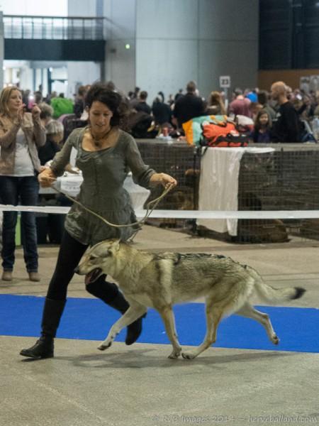 Expo Canine Metz-25