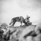 Loups-6